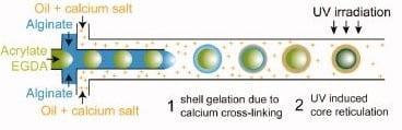 core-shell acoustic metamaterials microfluidics procedure