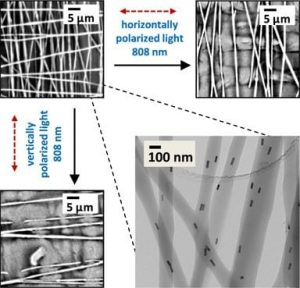 Polarized light selectively heats and melts nanofibers containing aligned gold nanorods within a cross-hatched mat when the polarization direction is parallel to the nanofiber direction.