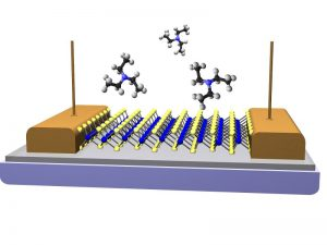This is a schematic of a vapor sensor fabricated from a single monolayer of MoS2. The conductivity of the MoS2 channel changes as specific types of vapor molecules briefly interact with the surface. Molecules of triethylamine are shown a chemical assoicated with V-series nerve gas agents. Image: U.S. Naval Research Laboratory.