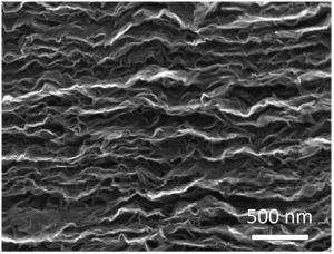 A high-magnification image of the fabricated electrodes.