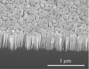 Nanowires growing on silicon. Image: Pallab Bhattacharya.