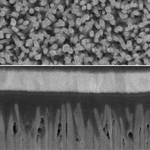 Scanning Electron Microscope images show an array of zinc-oxide nanowires (top) and a cross-section of a photovoltaic cell made from the nano wires, interspersed with quantum dots made of lead sulfide (dark areas). A layer of gold at the top (light band) and a layer of indium-tin-oxide at the bottom (lighter area) form the two electrodes of the solar cell.