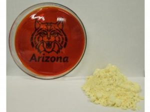 A University of Arizona-led research team has discovered a simple process for making a new lightweight plastic from the inexpensive and abundant element sulfur. The petri dish on the left contains the plastic. The yellow powder on the right is sulfur. The team has already made a lithium-sulfur battery -- the type of next- generation battery that is lighter and cheaper than those currently used in electric and hybrid cars. Jared Griebel/ Pyun lab, University of Arizona department of chemistry and biochemistry.