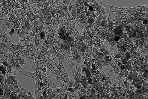 A high-resolution microscopic image of a new type of nanostructured-carbon-based catalyst developed at Los Alamos National Laboratory that could pave the way for reliable, economical next-generation batteries and alkaline fuel cells. Image: Los Alamos National Laboratory.