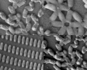 Researchers at MIT and the University of North Carolina created these coated nanoparticles in many shapes and sizes. Kevin E. Shopsowitz and Stephen W. Morton.