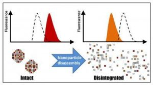nanoparticle-disassembly-fluorescence