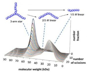 modeling-star-polymers
