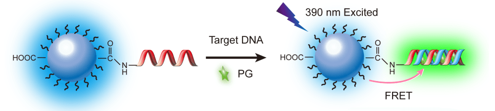 Illustration of conjugated polymer nanoparticles for label-free DNA sensing.