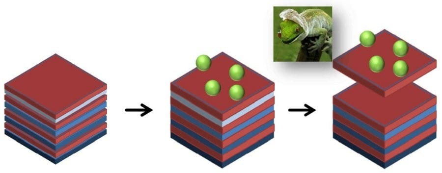 Self-regenerating-Antimicrobial-Surface-Coatings