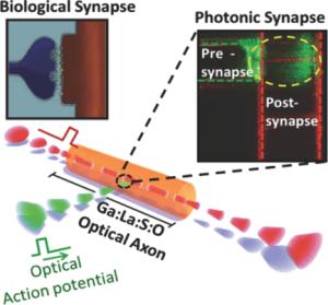 photonic synapse