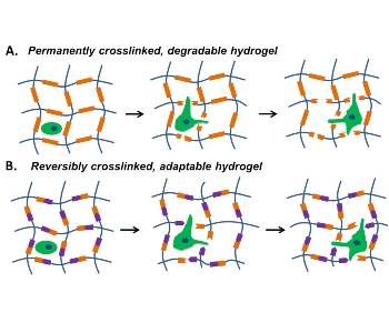 adaptable-hydrogels