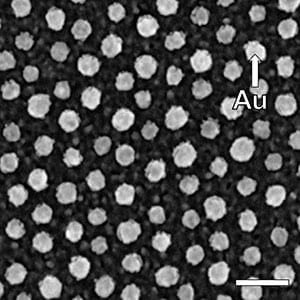 Top-view SEM image of a multifunctional nanopattern (scale bar: 50 nm)