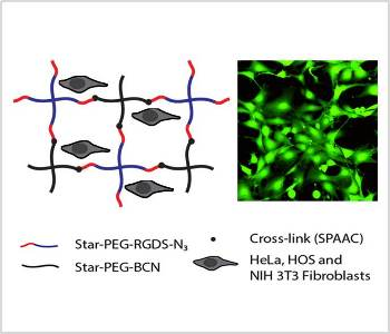 soft-biocompatible-peg-hydrogels