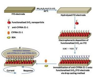 Fabrication Scheme of a Biosensor for Oral Cancer