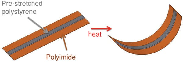 Upon heating, the bilayer structure changes shape.
