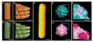 growing-bone-with-virus-nanoparticles.jpg
