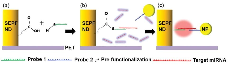Assembly of miRNA and nanoparticle
