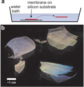 a) Illustration showing the immersion of the film–substrate in a water bath, and subsequent release of the film into the water. b) Floating PNIPAM films viewed from the side present colorful interference patterns.
