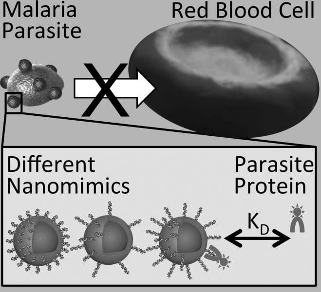 Polymer_based_Nanomimics_antimalarial