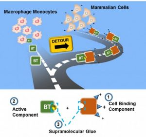Toxin-Inspired Macromolecules Fabricated by Supramolecular Engineering and Rerouting of BT Enzymes into Mammalian Cells