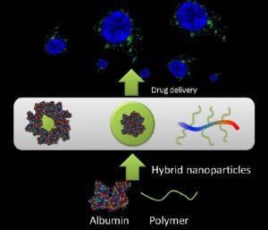AlbuminPolymer