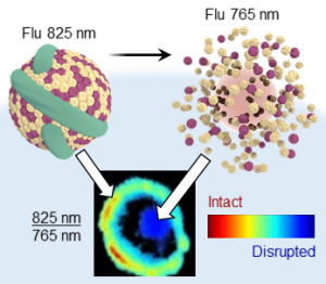 near-infrared-ratiometric-dye