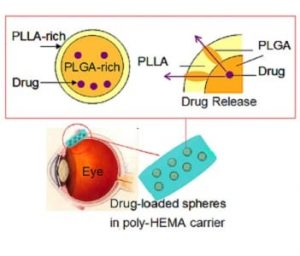 drug-loaded-spheres-in-poly-hema-carrier
