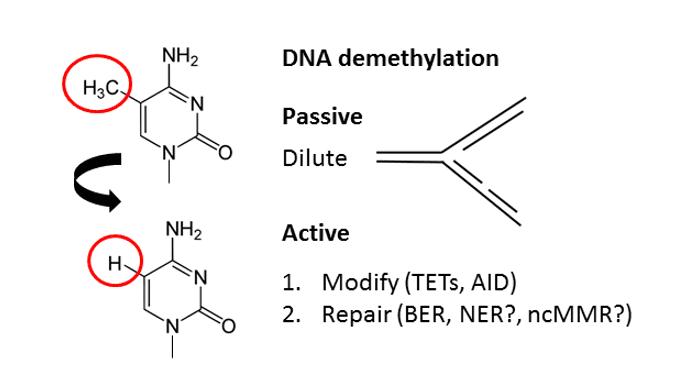 dna-pathways