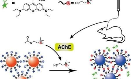 Gold-Nanoparticle-Based Assay for Alzheimer's Disease