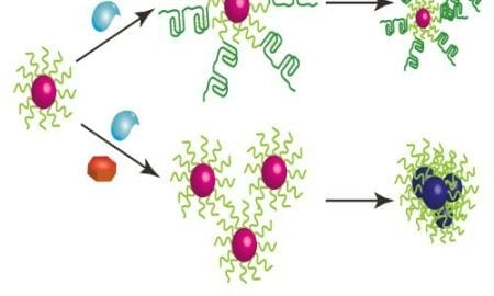 gold nanoparticles for measuring enzyme activity