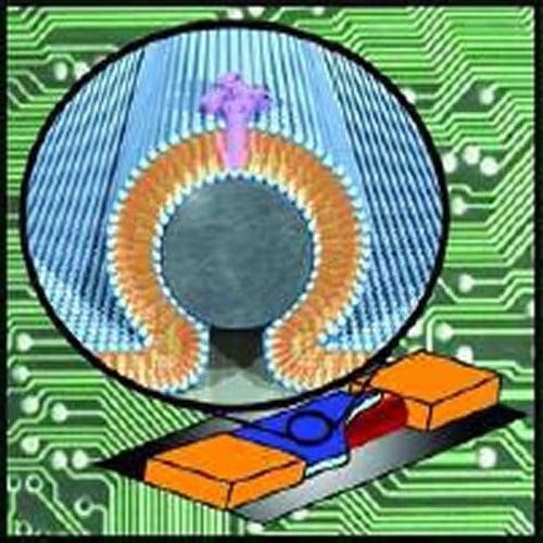 Bionanoelectronics – No Frankenstein