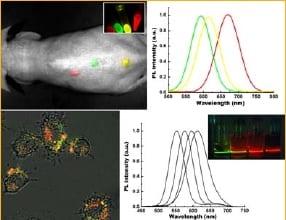 CdTe quantum dots for biophotonics