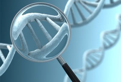 """Determining the DNA sequence of a living organism, and hence that information, requires a mapping of the sequence of nucleotides (containing the distinct base-pairs) that form the """"rungs"""" of the DNA """"ladder""""."""