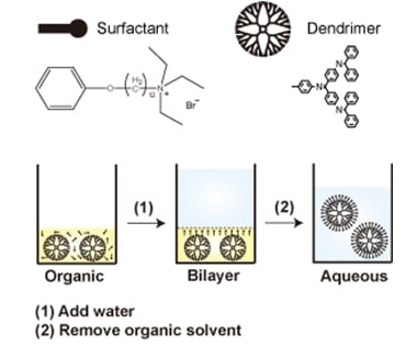 How to solubilize hydrophobic dendrimers