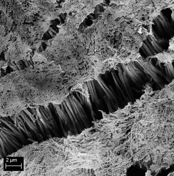 Polymer adhesives: Teflon made sticky - Advanced Science News