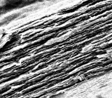 Works Well on Paper: The Graphene Muscle