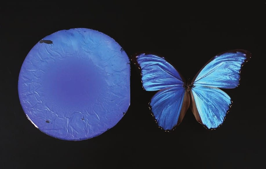 Mimicking Butterflies to Make Silica Thin Films