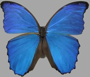 Copying Butterflies to Create 3D Magnetophotonic Crystals
