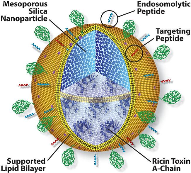 Protocells – A Versatile Drug Delivery Platform