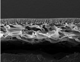 SPEEK nanofiltration membrane SEM