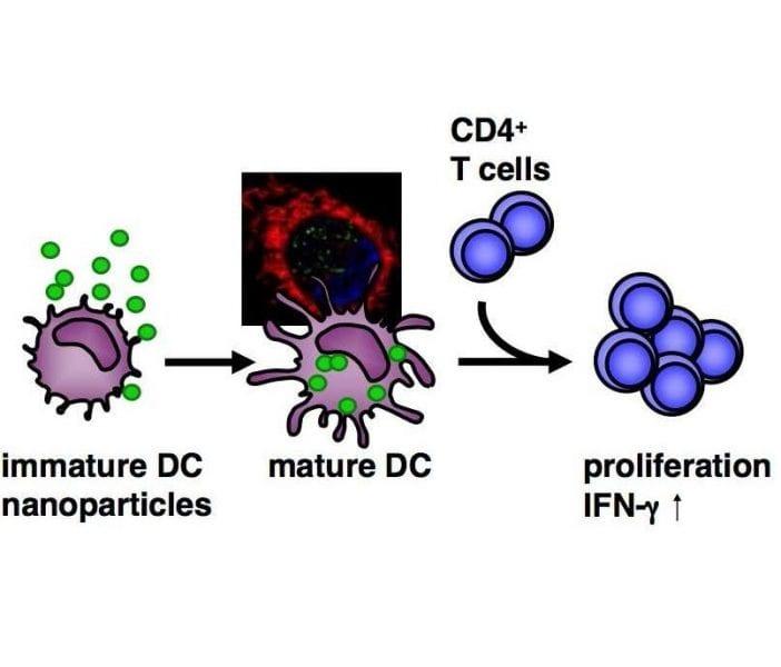Immunomodulatory effect of nanoparticles