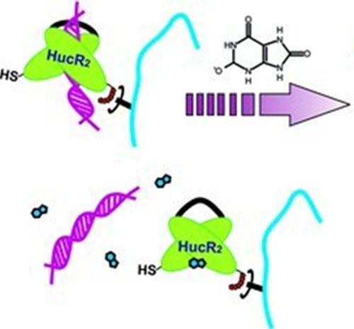 Metabolite-responsive hydrogels for medical diagnostics