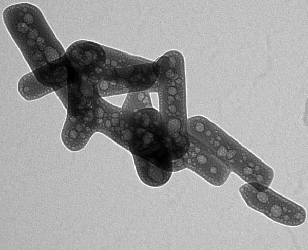 Synthesized nanoparticles