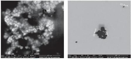 SEM and STEM images showing spherical-like silver nanoparticles with 50 nm diameter.