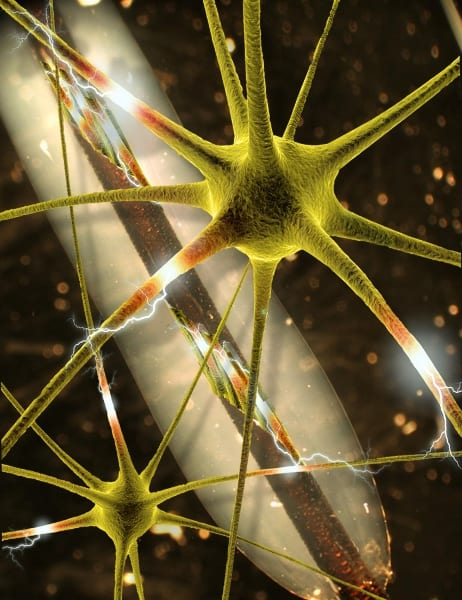 Hybrid tunnel may help guide severed nerves back to health
