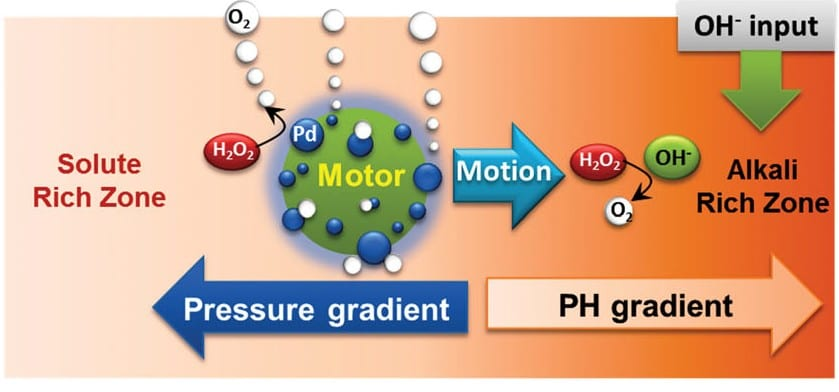 Swimming Microbots: Self-propelling Catalytic Micromotors Follow a pH Gradient