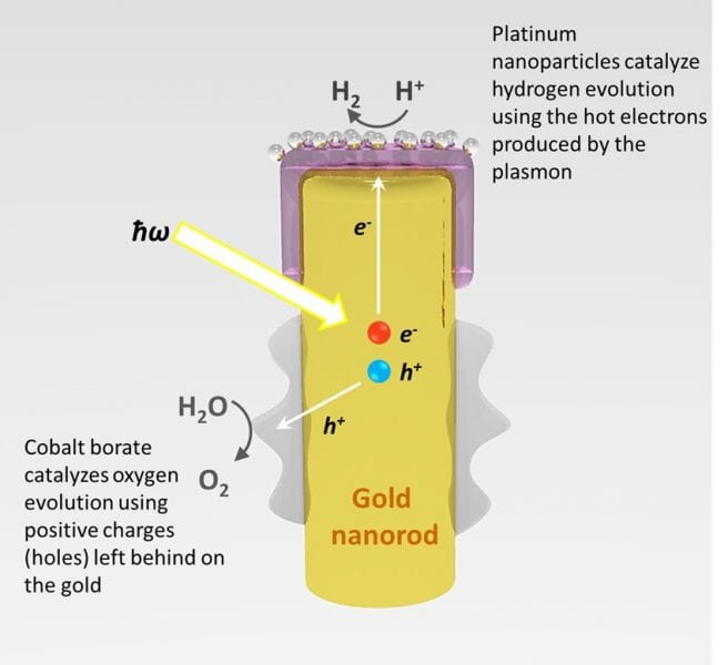 The process by which light is captured by the gold nanorod, and converted into energy that can spilt water (H2O) into hydrogen and oxygen. Image: Syed Mubeen.
