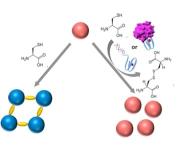 DNAzyme controlled aggregation of gold nanoparticles for DNA sensors and aptasensors