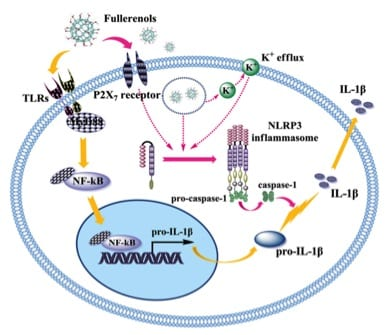 Polyhydroxylated metallofullerenols play dual roles to activate macrophages