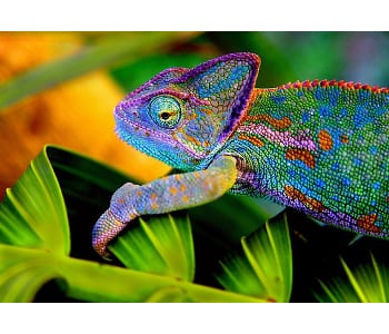 Keeping Good Company with the Chameleon